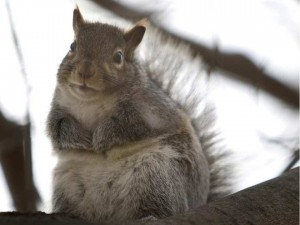 a-squirrel-sits-in-a-tree-stripped-of-its-fall-leaves-in-tor