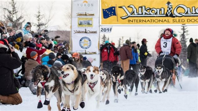 长达1600公里的越野赛从阿拉斯加Fairbanks开始