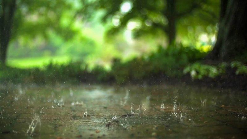 渥太华天气预报_下雨天了怎么办?这就教你怎么在渥太华过雨天!-新华侨网